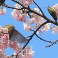 桜ジロ~名城公園