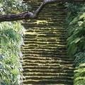 苔の階段~鎌倉 妙法寺