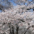 Photos: 稲荷山公園