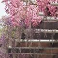 藤の回廊~名城公園