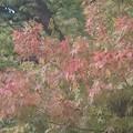 紅葉~北鎌倉