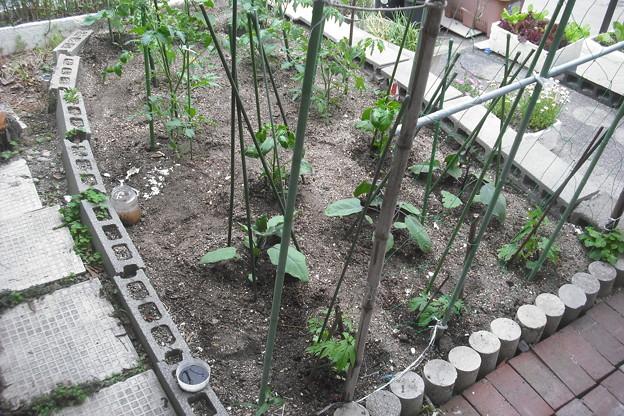 我が家の夏野菜畑