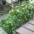 写真: 山鳩の居る木