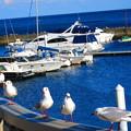 写真: 気持ちのいい港風景