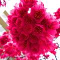 写真: 咲き乱れ・・