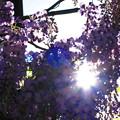 写真: 隙間からの光を・・