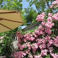 写真: 咲き誇る花弁たち