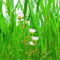 野に咲く花のように・・