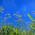 野に咲く花は・・