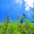 写真: 飛んで飛んで・・