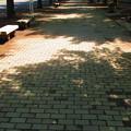 写真: 木漏れ日の中で・・