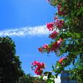 白い飛行機雲