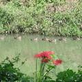川辺に咲く・・・・