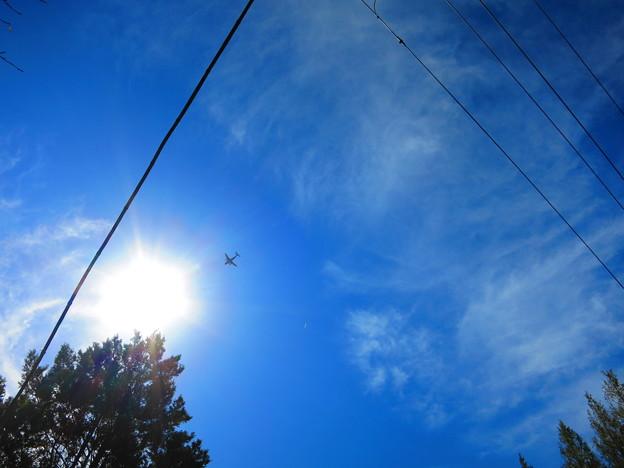 太陽に向かって・・