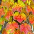 写真: 秋色・・・