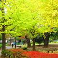 公園の秋パート2