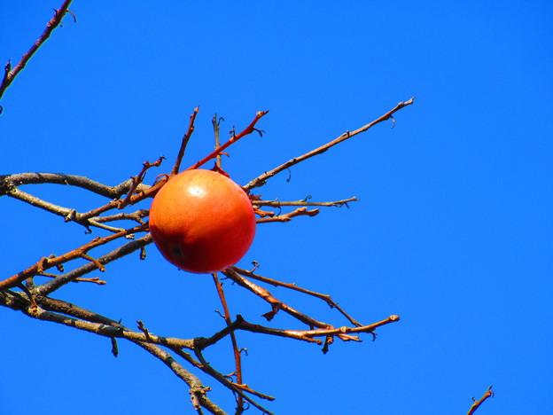 最後の一柿