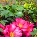 写真: 素敵なお庭ですね