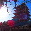 逆光の五重塔