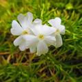 春近し・・・