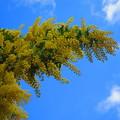 Photos: 青空に向かって・・