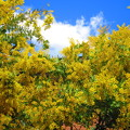Photos: 春の嵐か・・・?