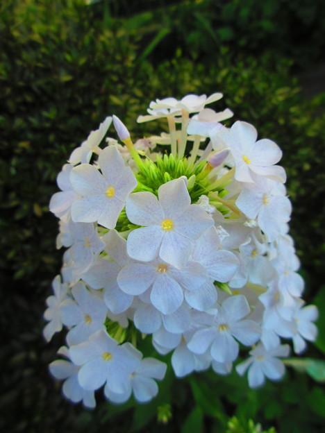 咲き誇る花弁たち
