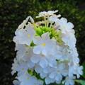 Photos: 咲き誇る花弁たち