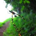 Photos: ん!蜘蛛・・