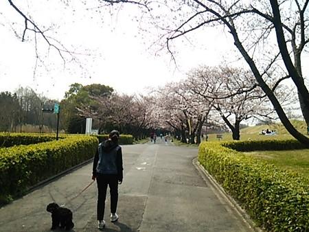 庄内緑地公園1