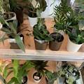 Photos: 渕上真希観葉植物を育てます!その1