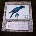 Photos: 赤羽西口 北区にいる鳥