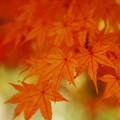 D100で綴る、秋の彩り