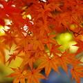 D100で綴る、秋の彩り 02