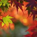 D100で綴る、秋の彩り 04