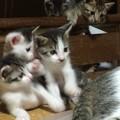 Photos: 遊ぶ子猫