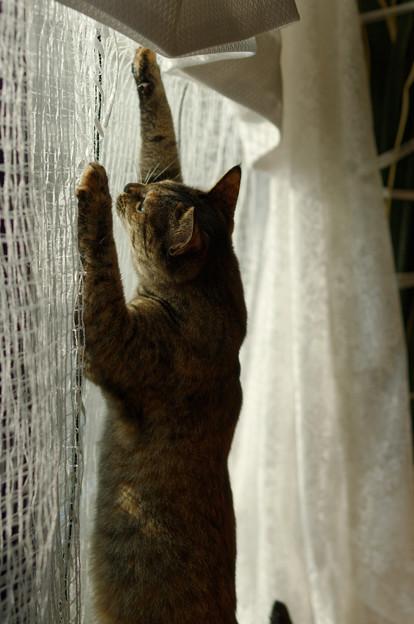 この網を越えれば自由ニャ
