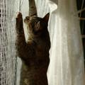 Photos: この網を越えれば自由ニャ