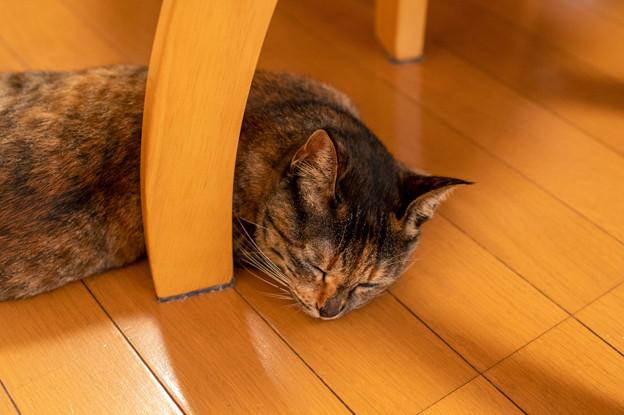 Photos: 椅子の下でくつろぐ