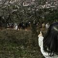 写真: 松田山にて