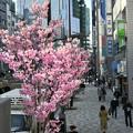 写真: 街路樹