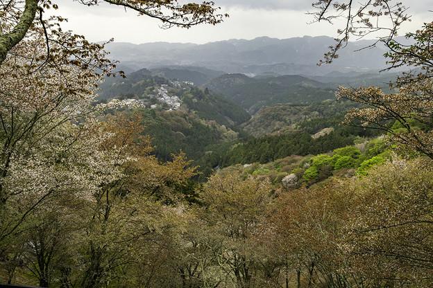 吉野山にて