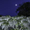 写真: 月夜
