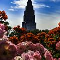 写真: 薔薇とドコモタワー