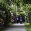 写真: シャクナゲ咲く散歩道