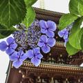 写真: 高幡不動にて