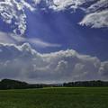 写真: 青麦畑