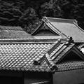 写真: 屋根