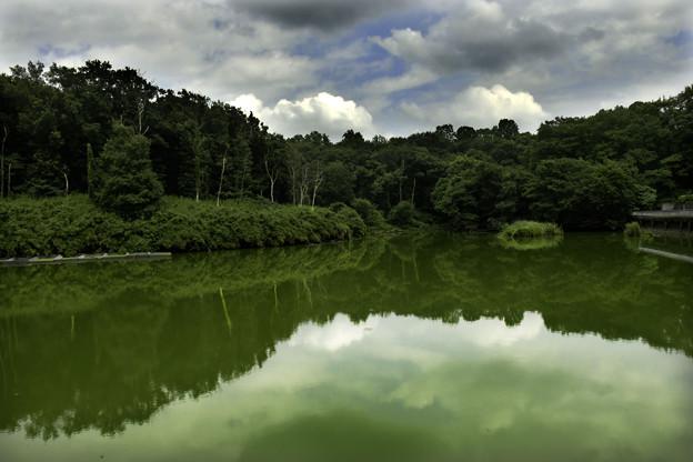 夏の日「森林公園にて」