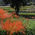 写真: 収穫の秋